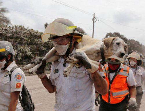 Update Vulkaanuitbarsting Guatemala